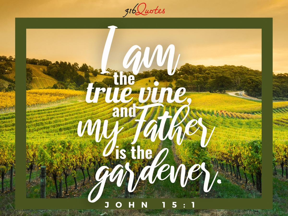 I Am The True Vine - John 15:1